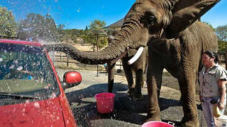 The Elephant Car Wash - Video
