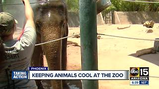 A look at how the Phoenix Zoo keeps animals cool in the summer - Video