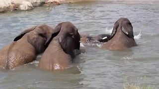 Elephants enjoy water at the Henry Doorly Zoo - Video
