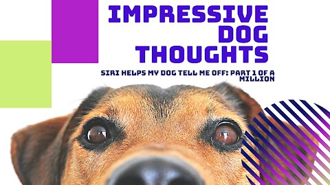Dog Thoughts Part 1!