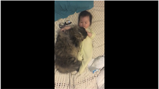 Baby cuddles sweet loving kitty