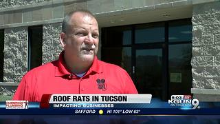 Roof rats concerning Tucson businesses - Video