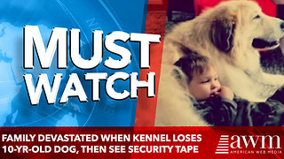 Family Devastated When Kennel Loses 10-Yr-Old Dog, Then See Security tape - Video