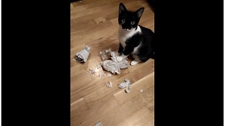 Kitty Makes A Mess In The Kitchen, And This Is Her Way Of Saying Sorry - Video
