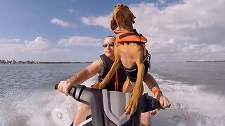 Dog Gets Sea Legs By Hitting The Waves On A Jet Ski