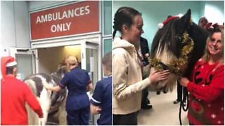 Horse visits his owner at the hospital