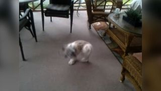 Dizzy Dog's Neverending Chase - Video