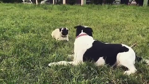 Hilarious doggies engage in epic argument