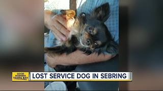 Lost service dog in Sebring - Video