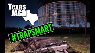 Texas Hill Country Hunting & #trapsmart feral hogs avoiding traps