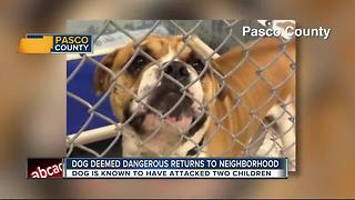 Dog deemed dangerous returns to neighborhood