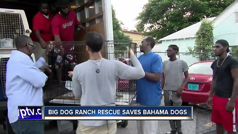 Canine rescue missions begin in Marsh Harbour