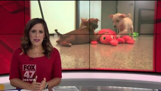 Local Humane Society saves 19 dogs from kill shelter
