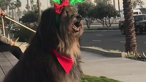 Dog models awesome Christmas antlers