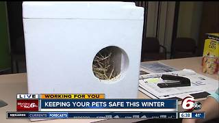Winter Weather Preparedness: Keeping your pets safe this winter - Video