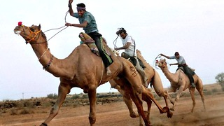 Indian Camel Racing - Video