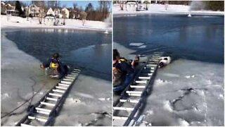 Dog stuck in frozen lake is rescued