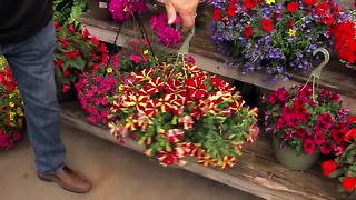 Hanging Baskets - Video