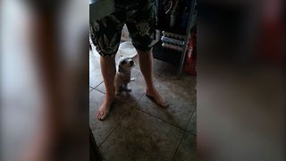 Adorable Puppy Hides Behind Dad At The Mention Of Bath Time