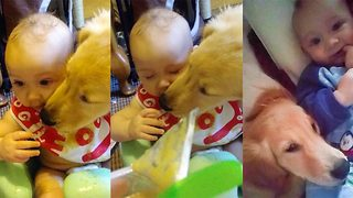 Mucky pup – Pooch licks baby clean when he spills food over himself - Video