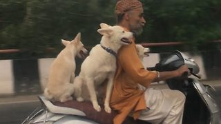Adorable moment three pooches spotted enjoying a evening ride with owner on scooter - Video