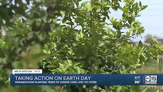 Group to plant 100 trees in S. PHX to help with heat, food