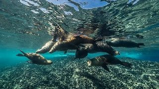 Divers Discover Marine Life in the Sea of Cortez