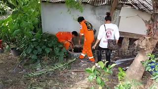 Abandoned dog rescued after falling into septic tank - Video