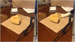 Sneaky cat tries to steal a piece of bread