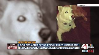Dog dies after eating rat poison in backyard - Video