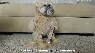 Munchkin the Teddy Bear loves peanut butter