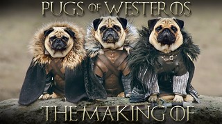 The Pugs Of Westeros: The Making Of - Video