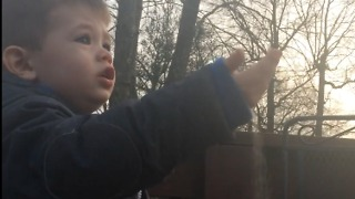 "Cutest little boy offering birds ""sand"" for dinner  - Video"