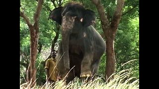 Elephants Get Fit - Video