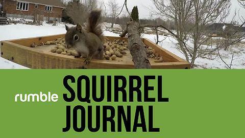 This squirrel journal video compilation is high-energy fun!