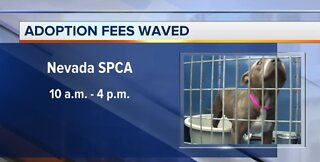 Adoption fees waived today