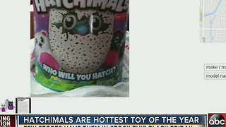 Popular Hatchimal toy hard to get this season - Video