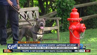 Baltimore Humane Society's Dogfest kicks off Saturday