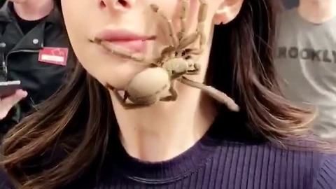 Woman Faces Biggest Fear By Letting A Tarantula Walk On Her Face