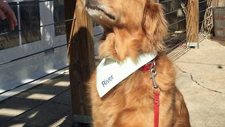 Golden retriever proves to be man's best friend as he holds beer for owner - Video