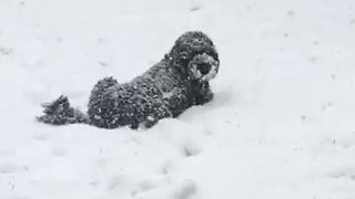 Dog Enjoys Being Completely Covered In Snow