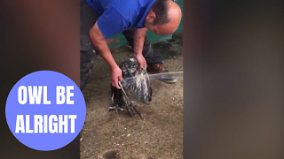 RNLI crew rescue and saved Eagle Owl which was stuck in mud