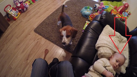Helpful dog assists owner with diaper changing