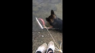 Dog gets fright of his life when fish fights back