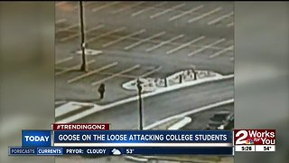 Goose on the loose attacks college students
