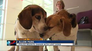 Police reunite metro Detroit woman with dogs that ran off - Video