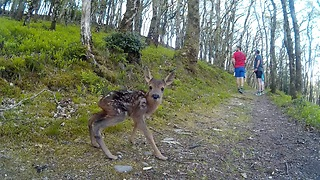 These Runners Encounter A Newborn Baby Deer On The Trail - Video