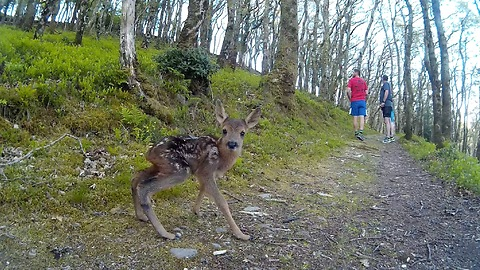 These Runners Encounter A Newborn Baby Deer On The Trail