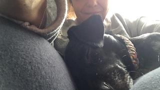 Chiweenie Succumbs to Gramma's Magical Touch  - Video