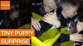 Young Boy Is Surprised With a Beagle Puppy - Video